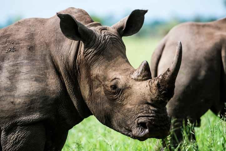 gray rhino in macro photography